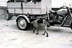 1951-