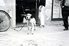 1_1951