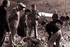 FESTADEGLI-ALBERI-1954-16-